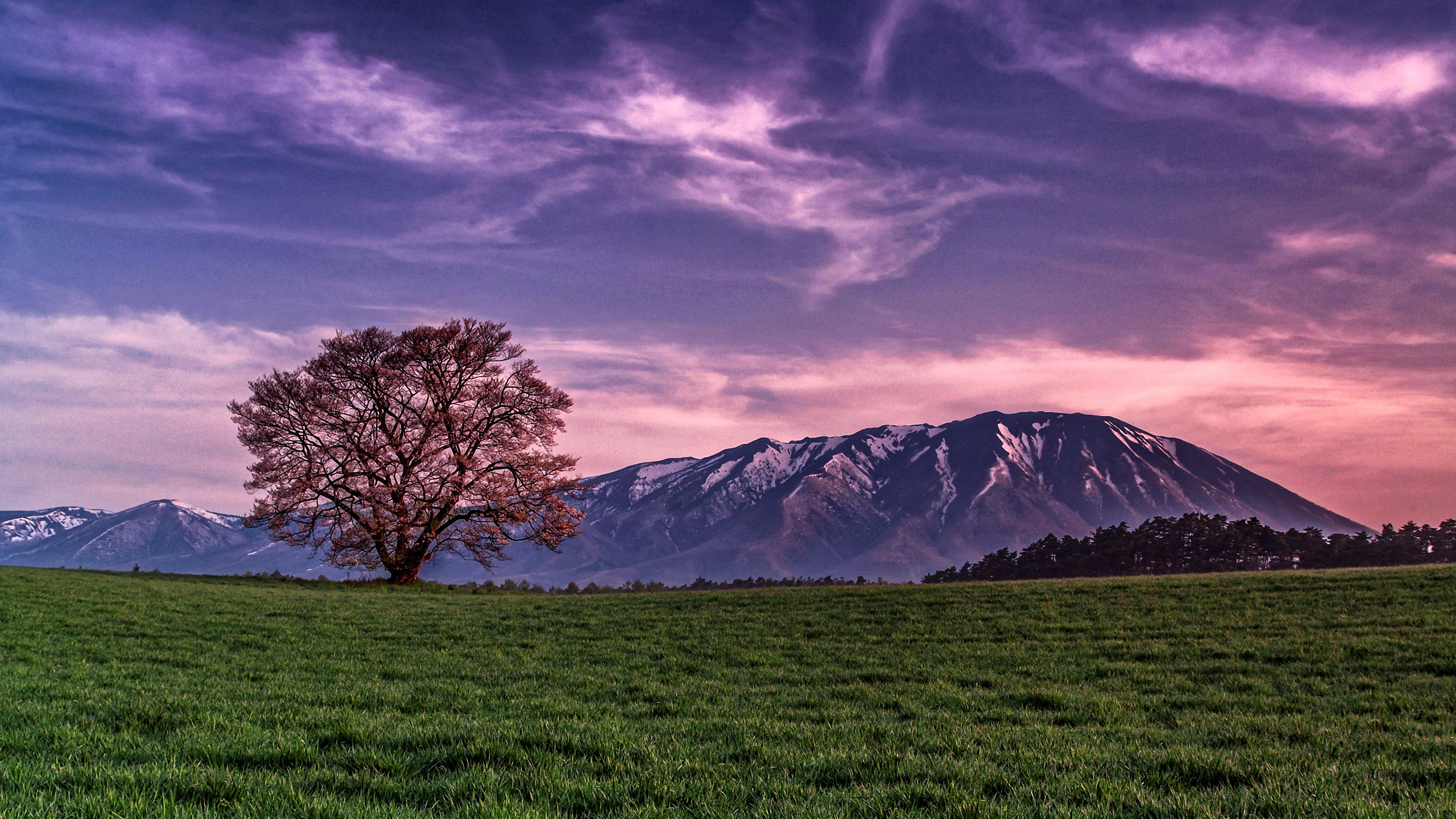 Lonely tree hd wallpaper background image 2880x1620 id 656348 wallpaper abyss - 2880x1620 wallpaper ...