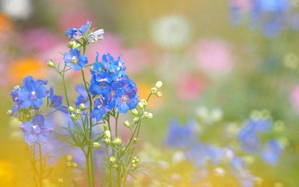 Earth Flower Flowers Nature Blue Flower HD Wallpaper | Background Image