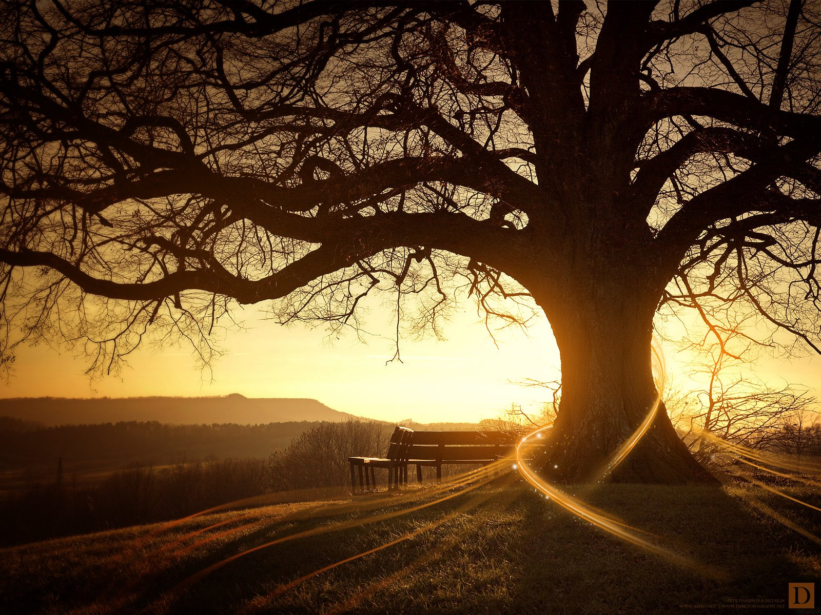 Earth - Sunset  Tree Sun Sunbeam Wallpaper