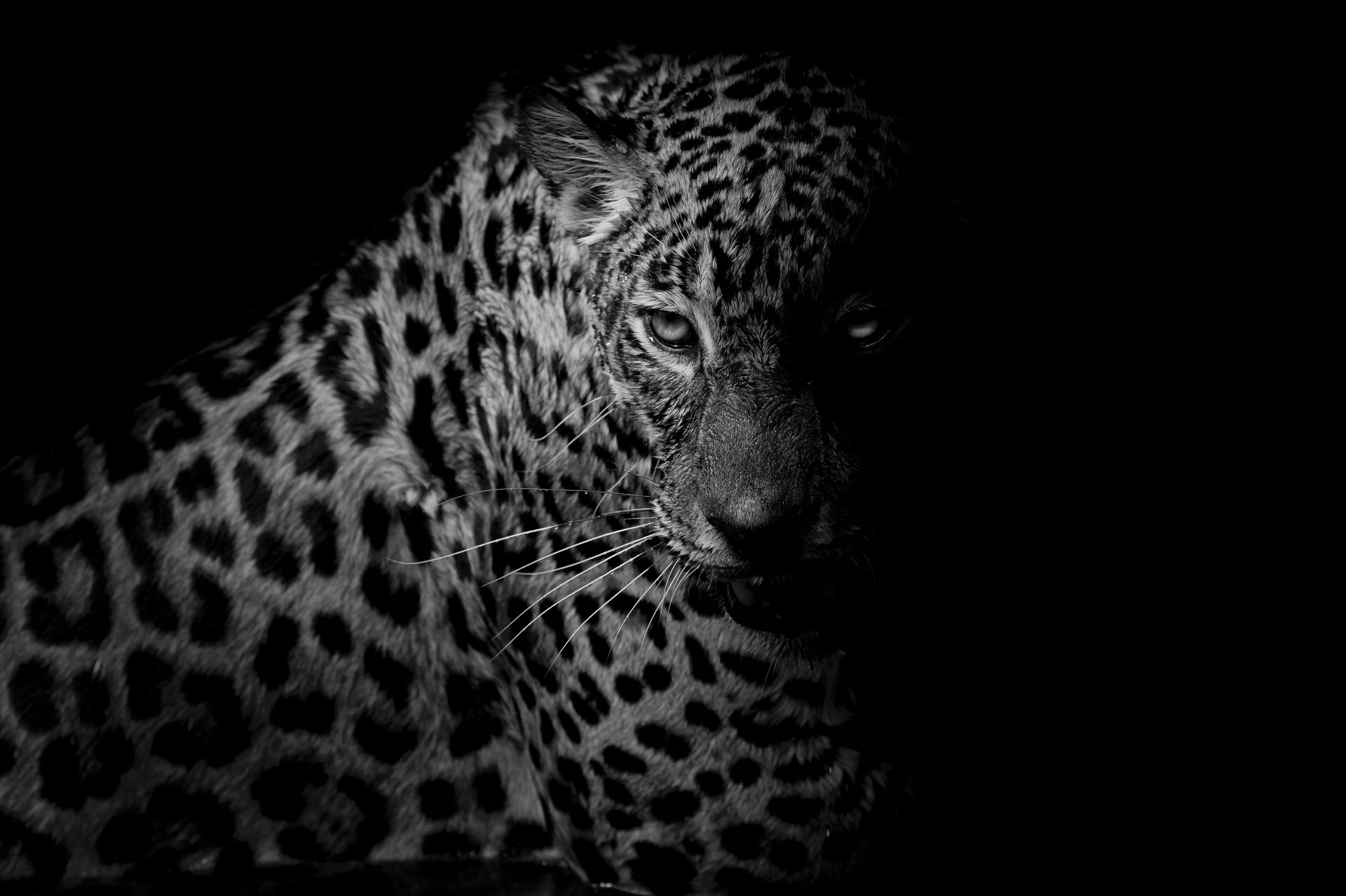 white cheetah wallpaper hd - photo #18