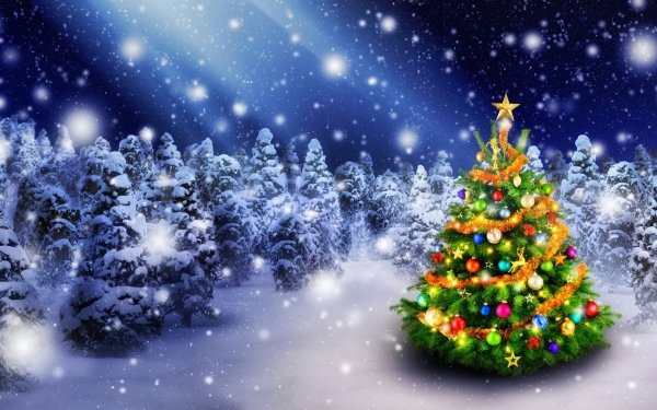 Holiday Christmas Snow Forest Christmas Tree Night HD Wallpaper | Background Image