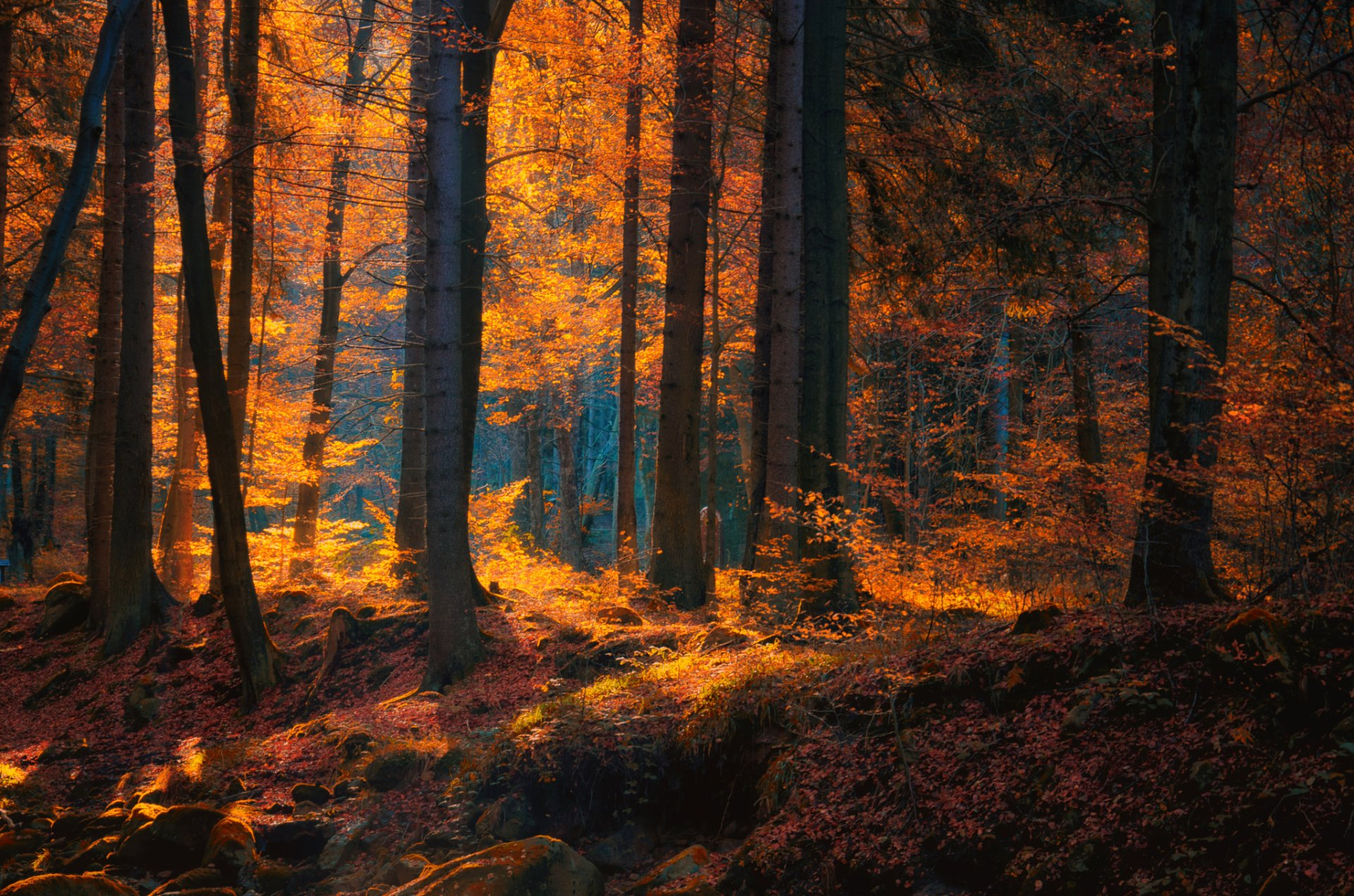 Autumn Forest Full Hd Wallpaper And Background Image