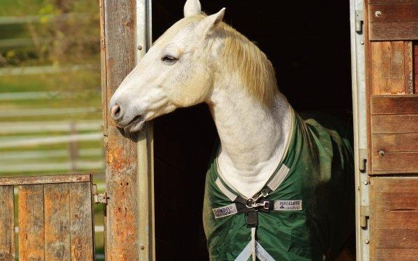 Animal Horse Pet HD Wallpaper | Background Image