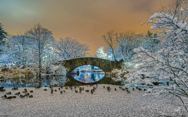 Photography Winter Earth Bridge Central Park Snow Tree HD Wallpaper | Background Image