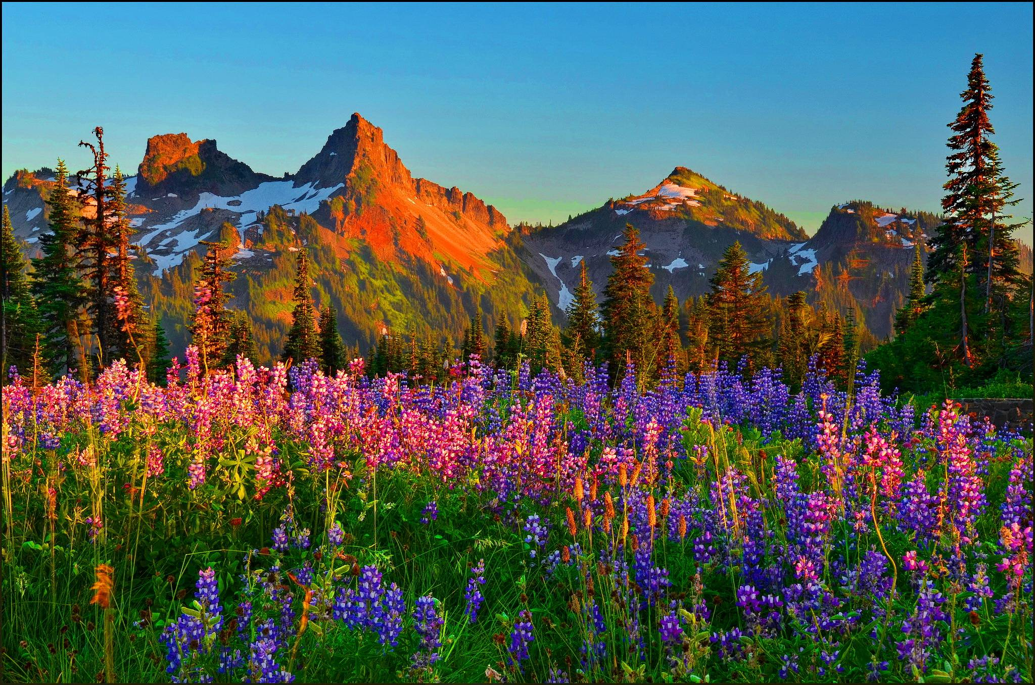 Mountain Wildflowers HD Wallpaper | Background Image | 2048x1356 | ID:677738 - Wallpaper Abyss