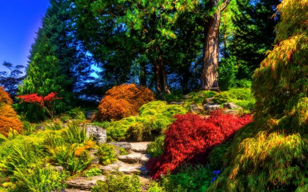 Man Made Garden Tree Shrub Colors Colorful HD Wallpaper | Background Image