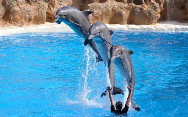 Animal Dolphin Bottlenose HD Wallpaper | Background Image