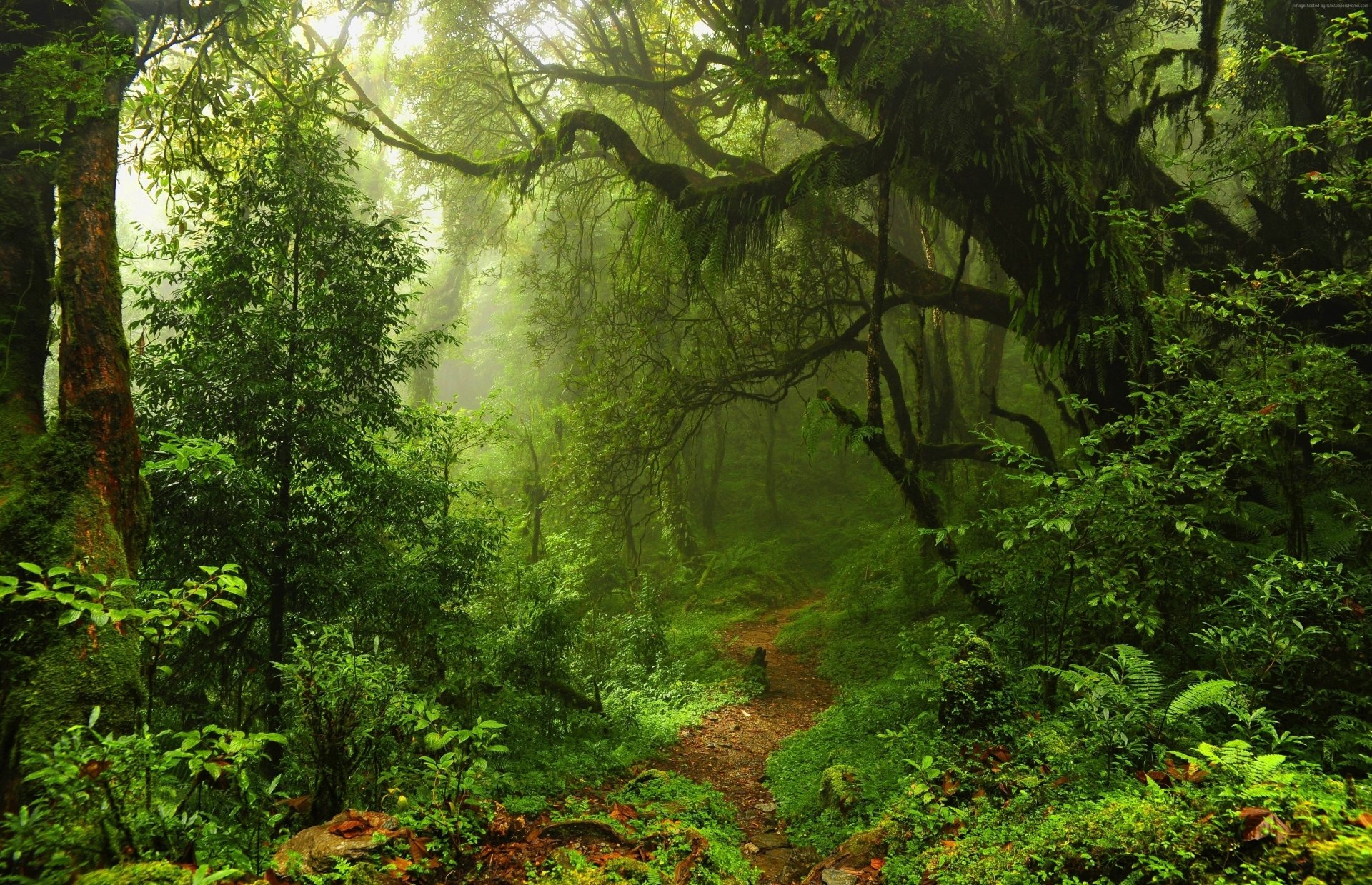 Earth - Path  Nature Forest Green Tree Moss Wallpaper