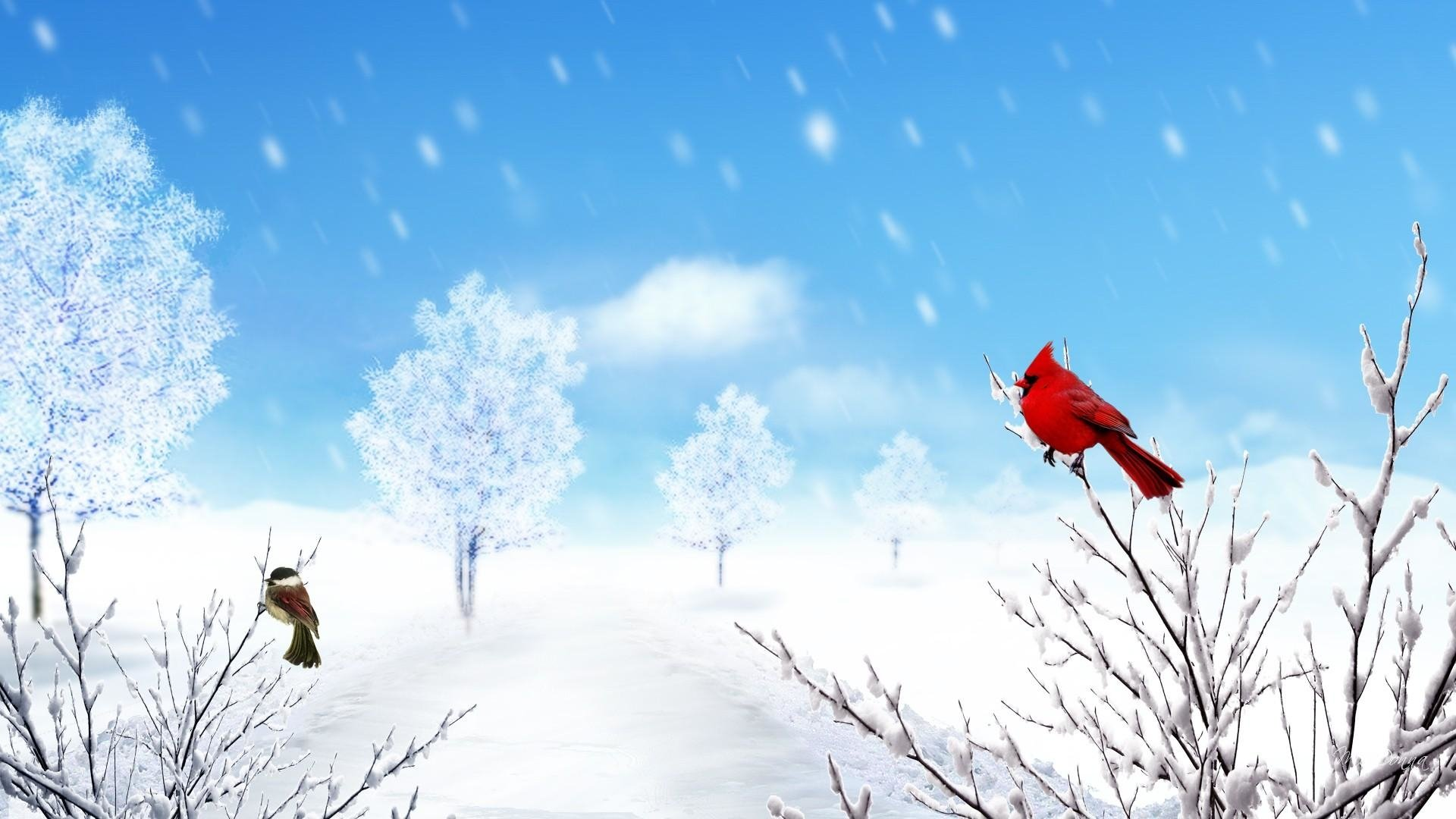 Birds in winter hd wallpaper background image - Winter cardinal background ...