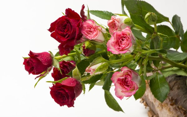 Earth Rose Flowers Basket Red Flower Pink Flower Water Drop HD Wallpaper   Background Image