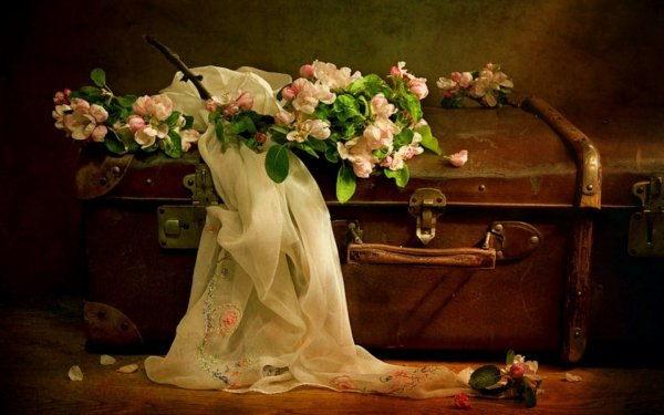 Photography Still Life Scarf Flower Vintage Suitcase HD Wallpaper | Background Image