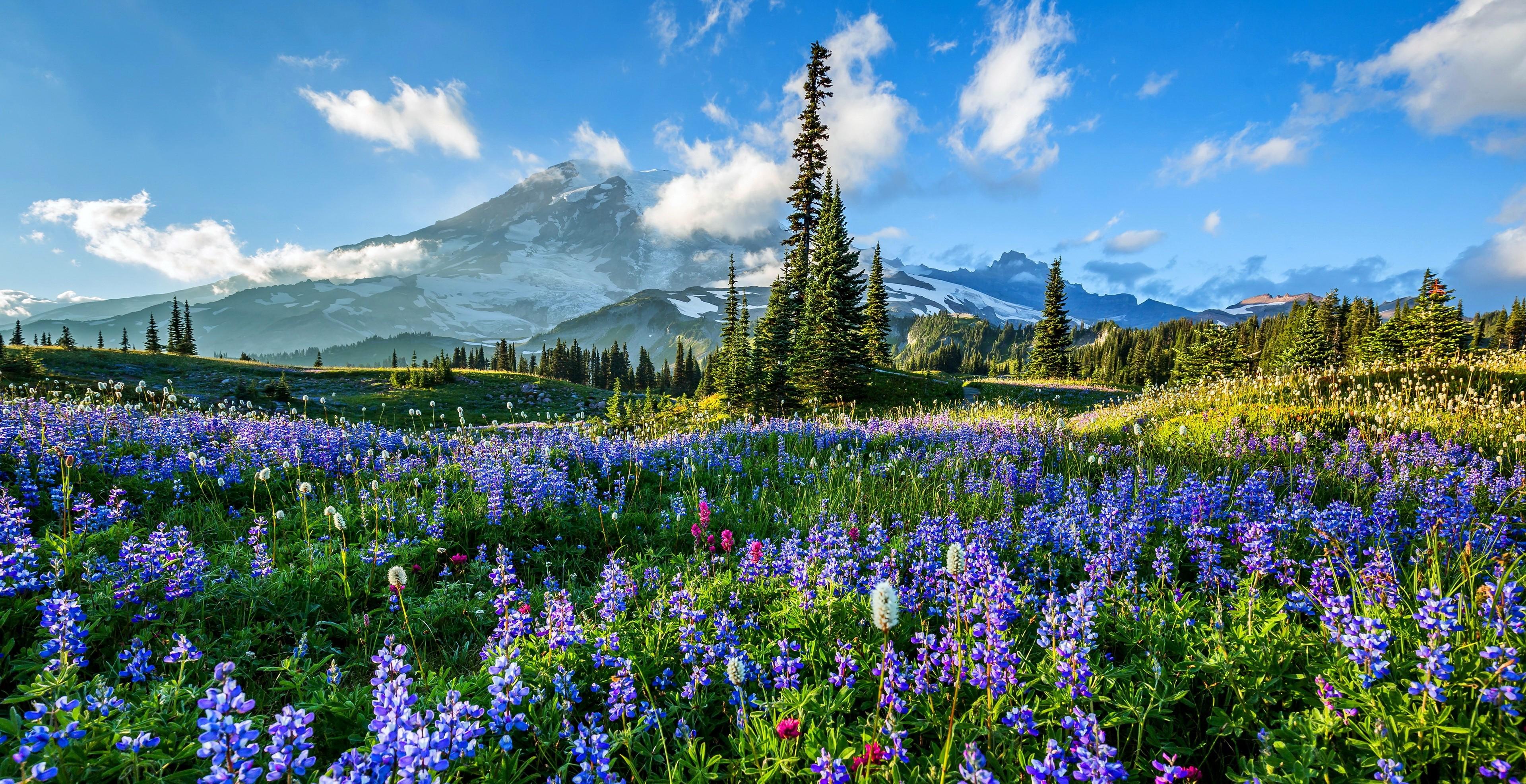 Flowers On Mount Rainier HD Wallpaper