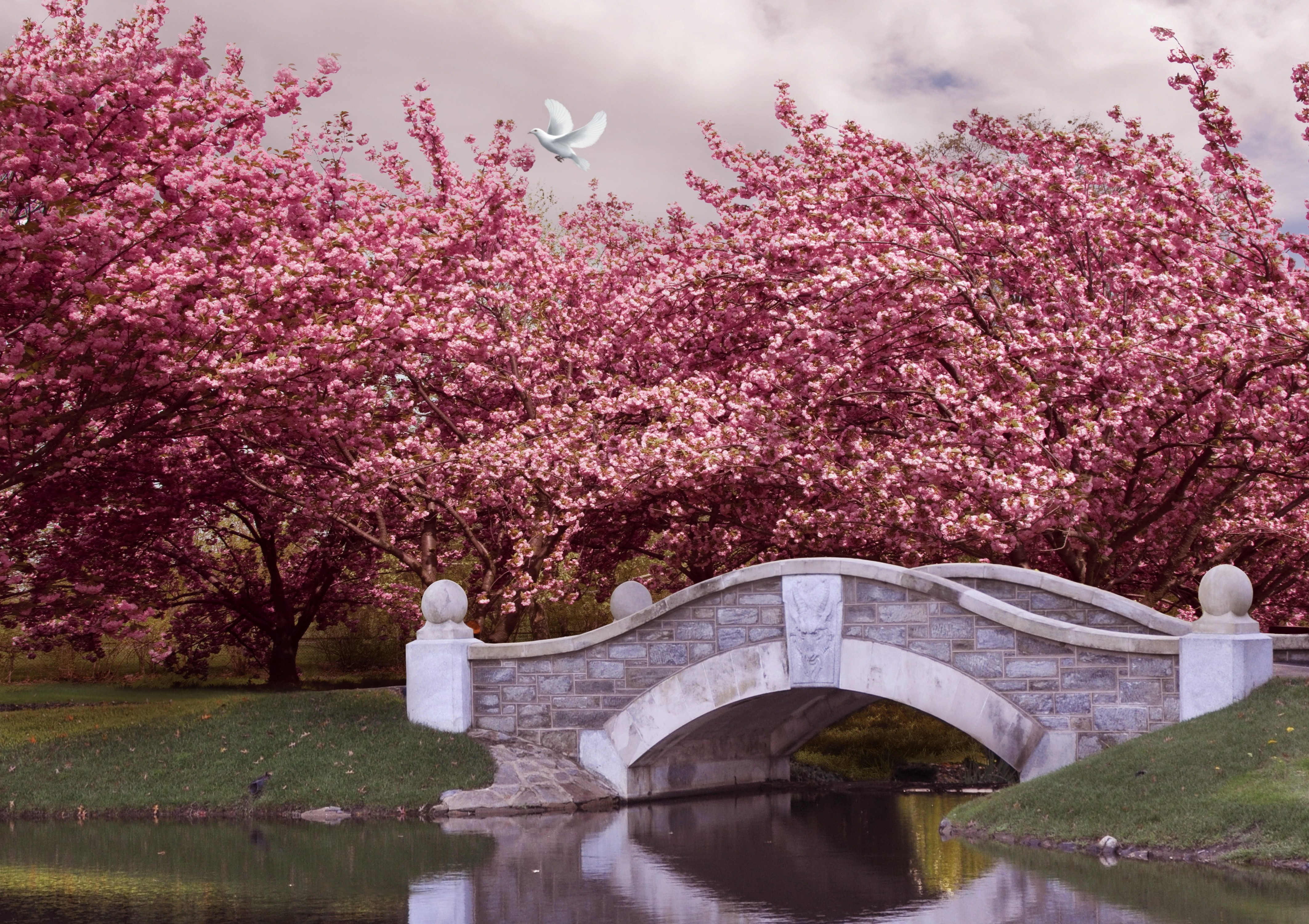 4k Nature Spring Wallpaper: Pink Flowering Trees Over Bridge 4k Ultra HD Wallpaper