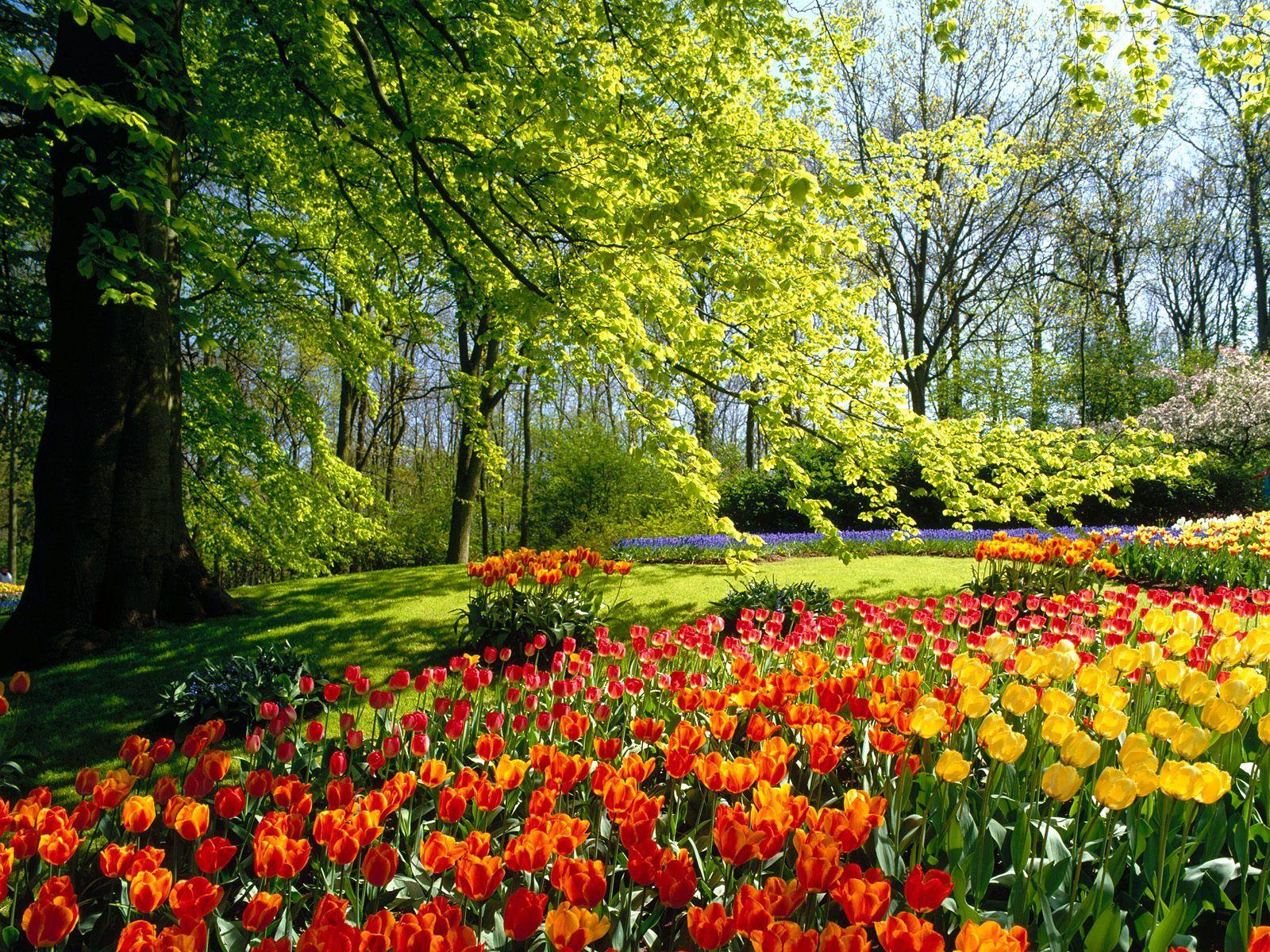 Resultado de imagem para campos floridos