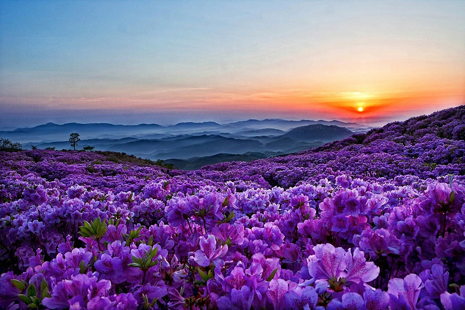 Spring Mountain Landscape Flowers Purple Colored Hills: Spring Flowers In The Mountains Wallpaper And Background
