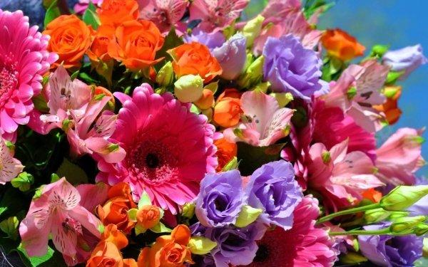 Terre/Nature Fleur Fleurs Bouquet Colorful Rose Gerbera Lys Close-Up Fond d'écran HD | Image