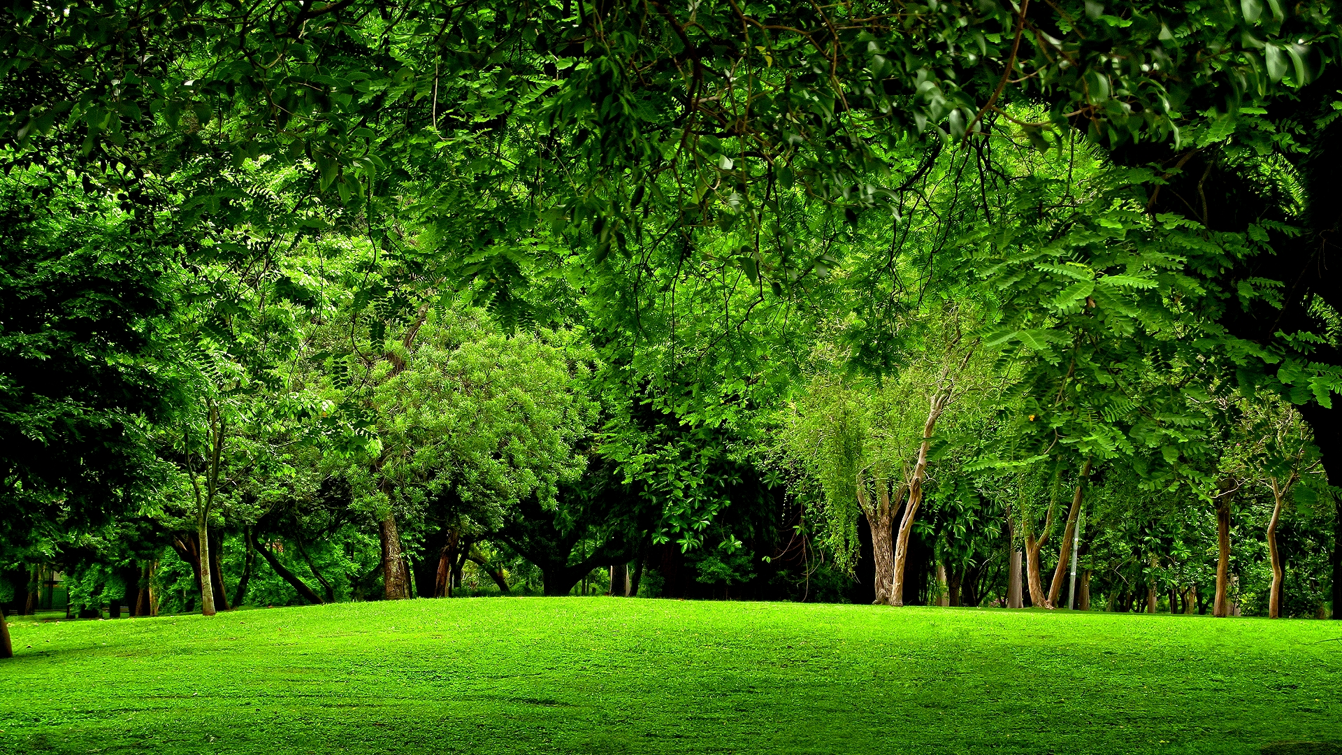 Green Forest Full HD Wallpaper And Background Image