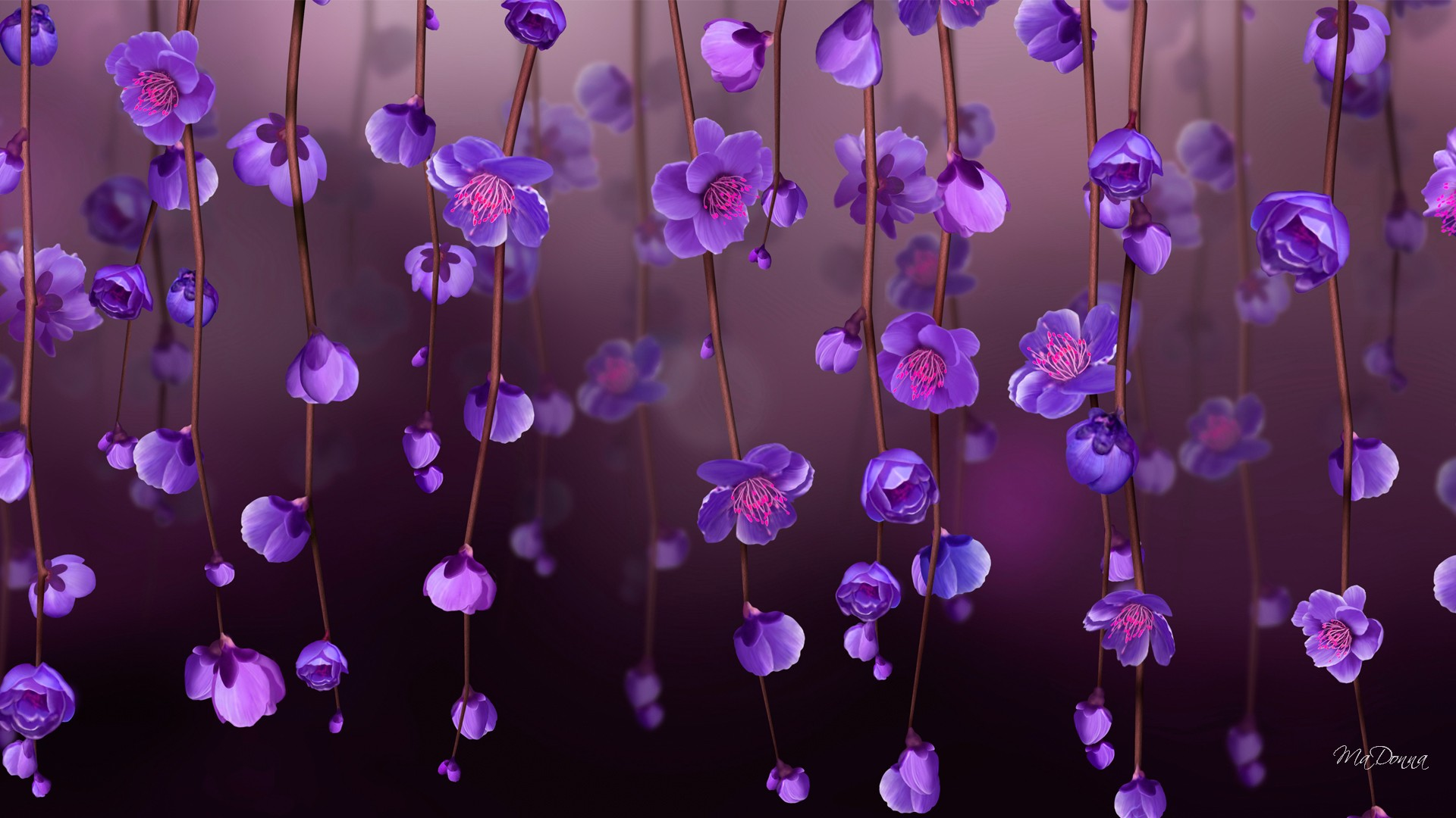 Purple Blossoms Full HD Wallpaper And Background Image