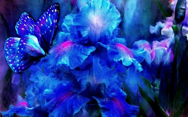 Artistic Butterfly Iris Blue HD Wallpaper   Background Image