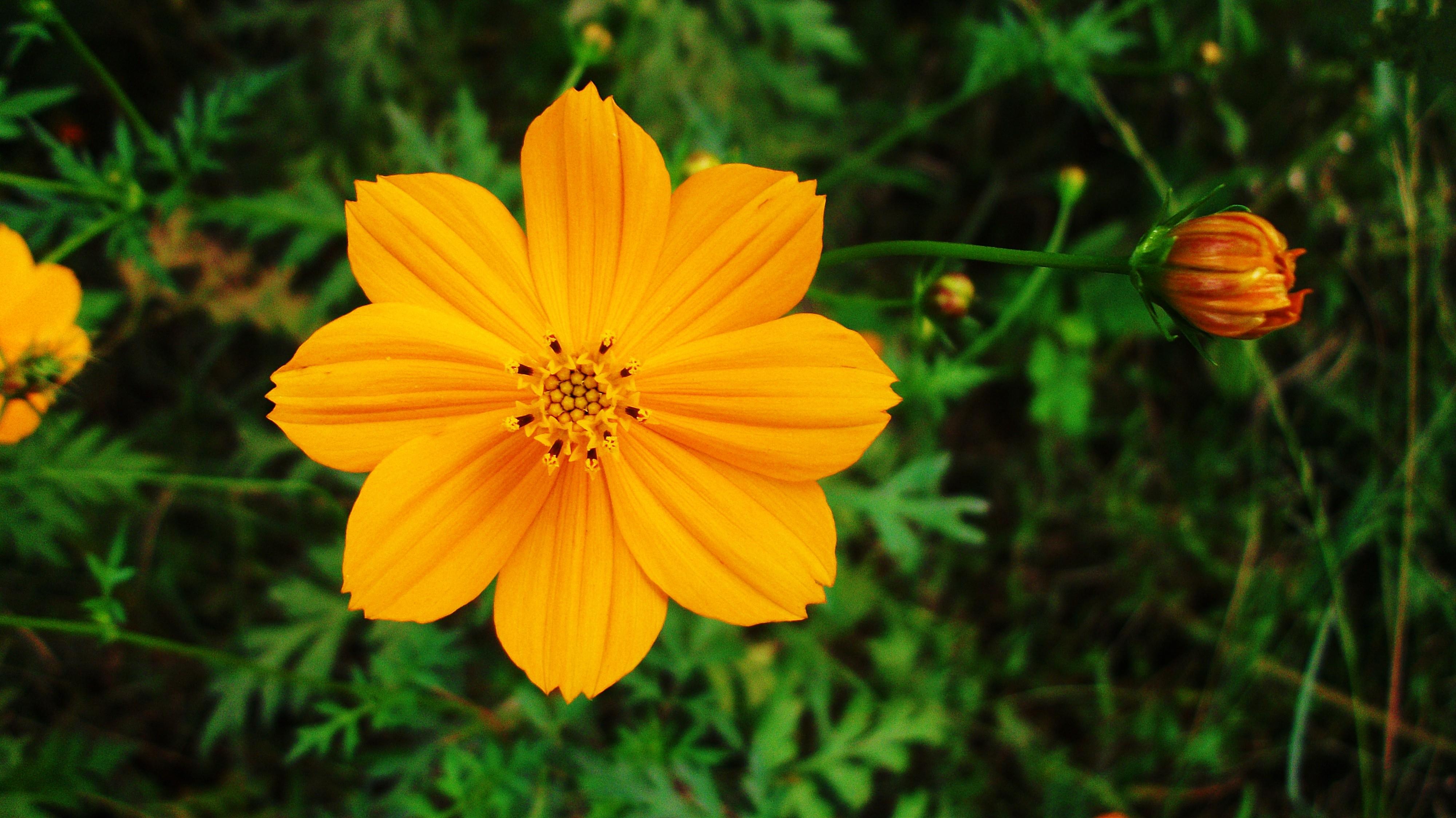 Golden Flower 4k Ultra HD Wallpaper | Background Image | 4000x2248
