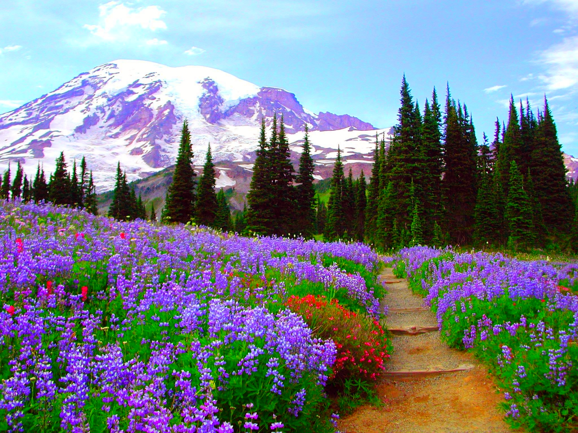 Flower Field in the Mountains HD Wallpaper | Background Image ...