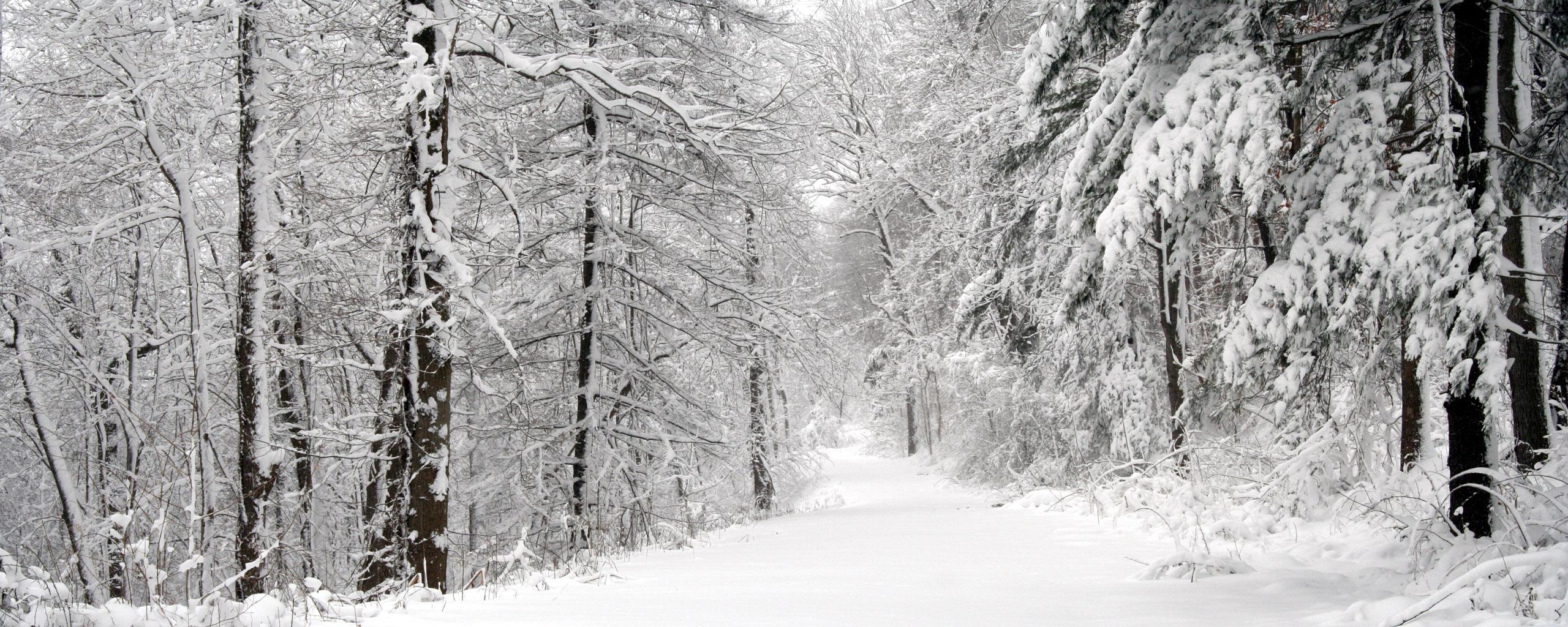 Multi Monitor - Erde/Natur  Snow Pfad Baum Wallpaper