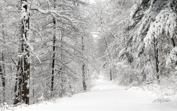 Earth Winter Tree Path Snow Forest HD Wallpaper | Background Image