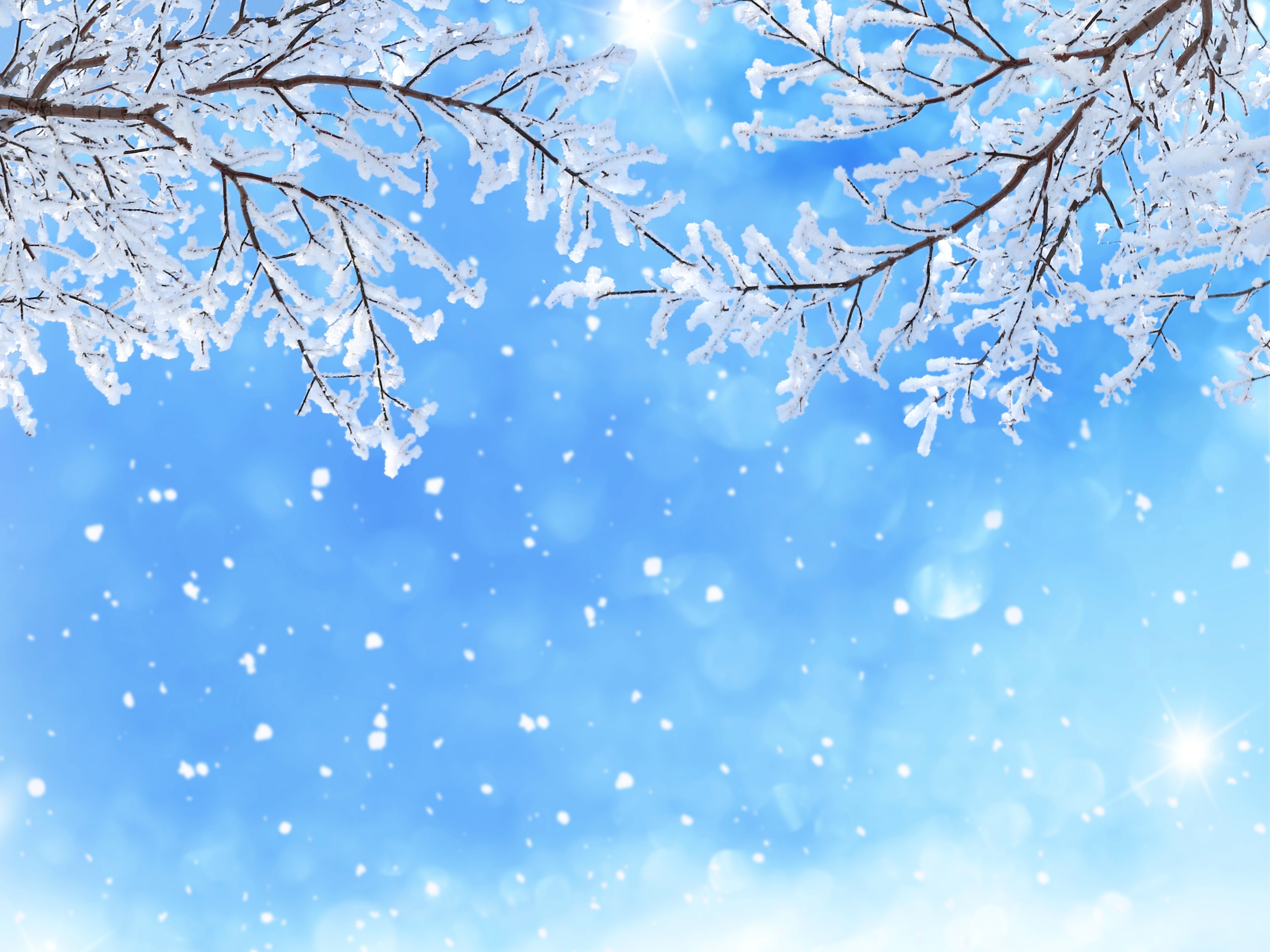 Winter Branches In The Snow 5k Retina Ultra Fondo De
