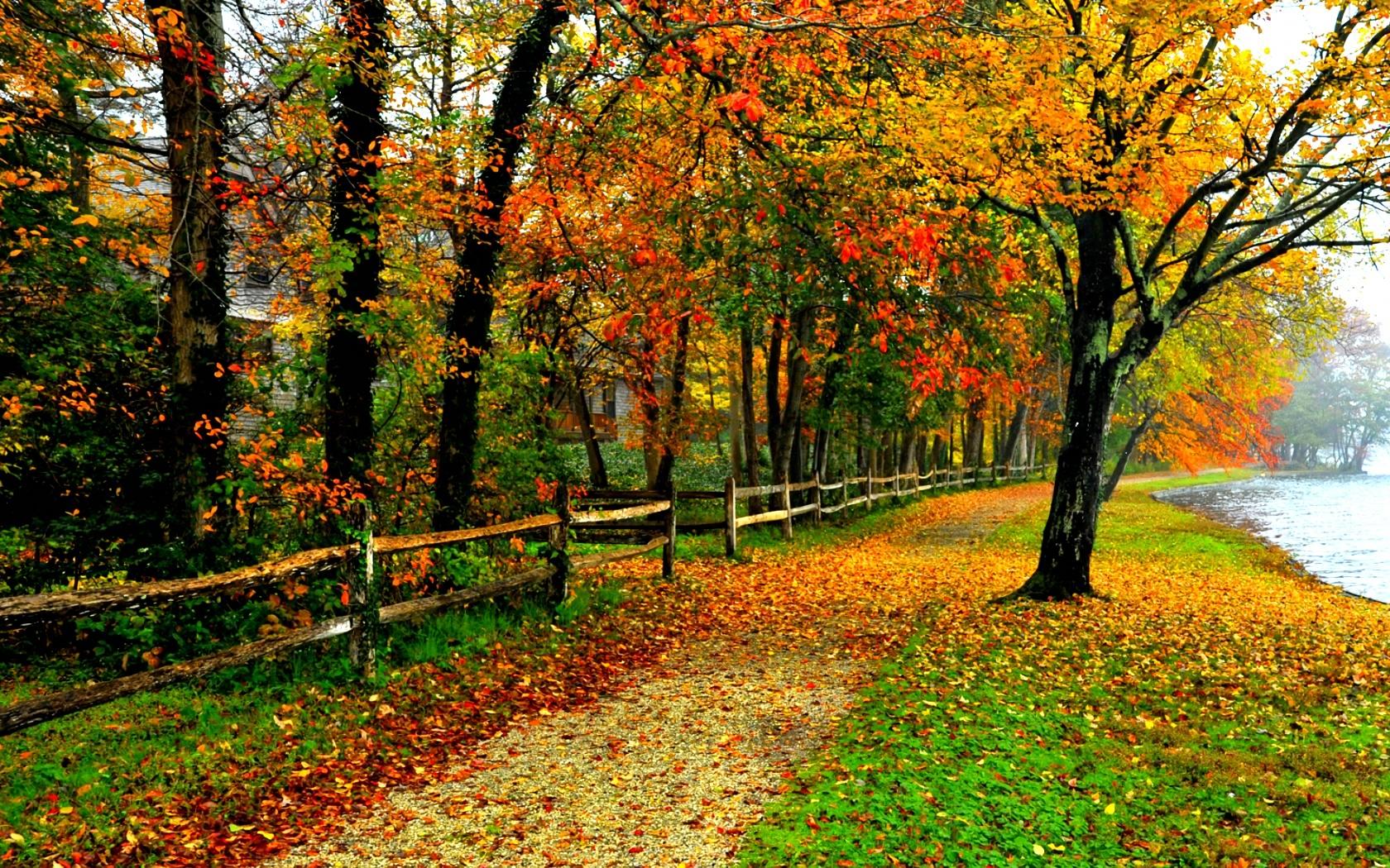Autumn Sidewalk Wallpaper and Background Image | 1680x1050 ...