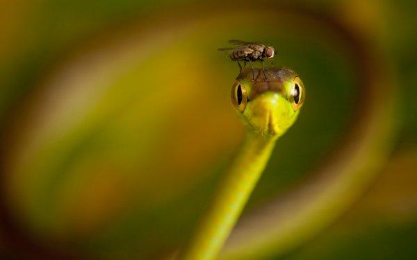 Animal Fly Snake HD Wallpaper | Background Image