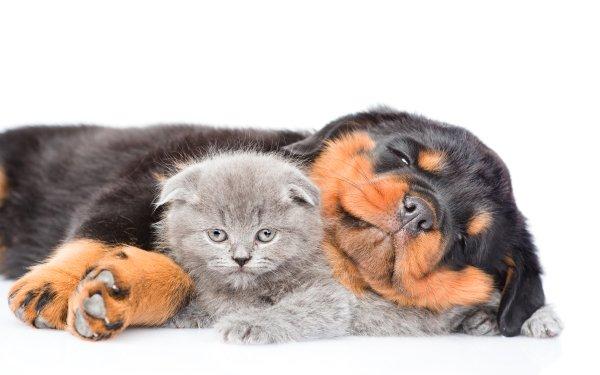 Animal Cat & Dog Cat Kitten Dog Puppy Baby Animal Rottweiler Cute HD Wallpaper | Background Image