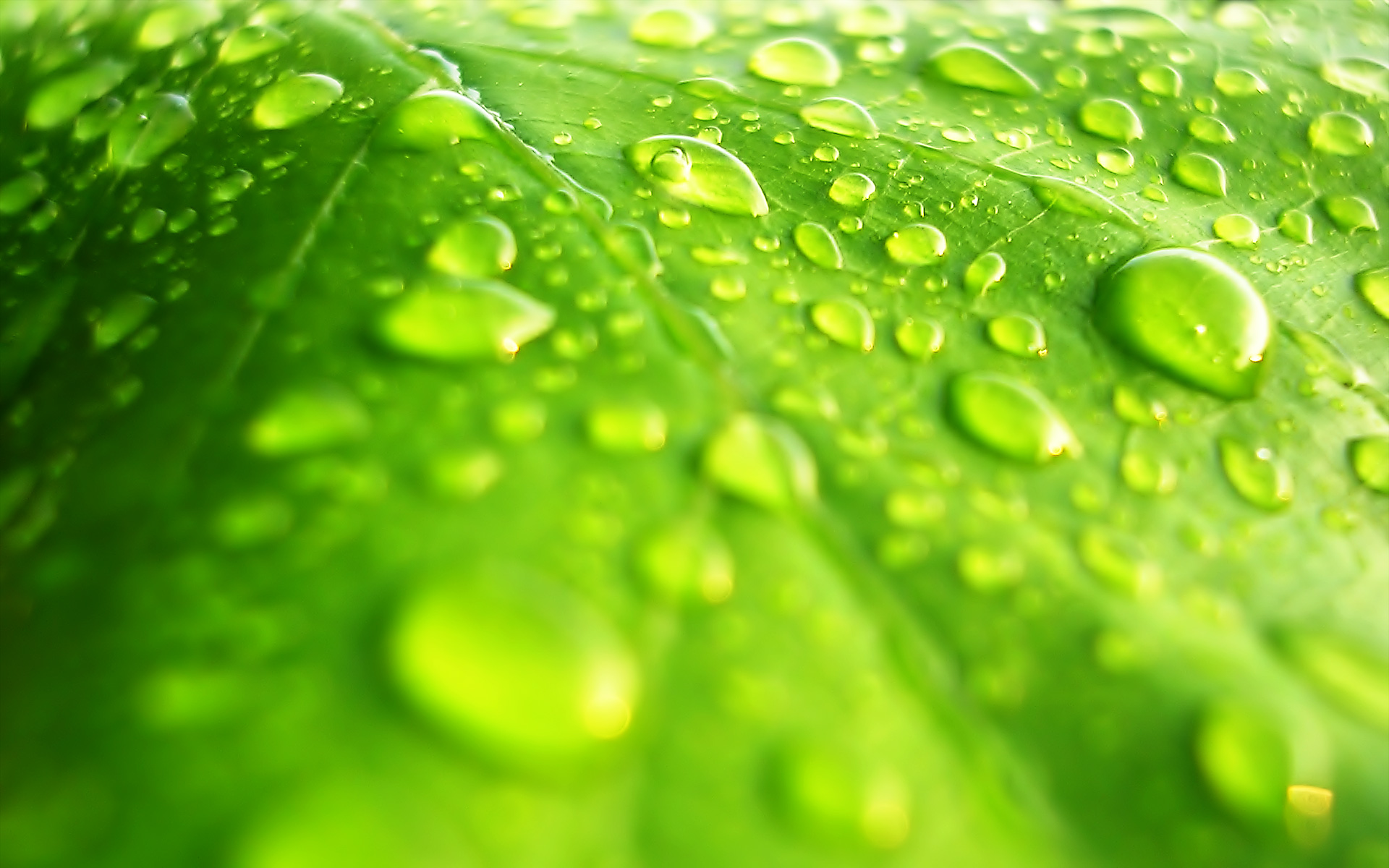 Water Drop Full HD Wallpaper And Background Image