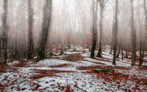 Earth Forest Nature Snow Winter Tree Fog HD Wallpaper   Background Image