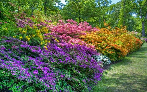 Tierra/Naturaleza Primavera Parque Jardín Bush Flor Fondo de pantalla HD | Fondo de Escritorio