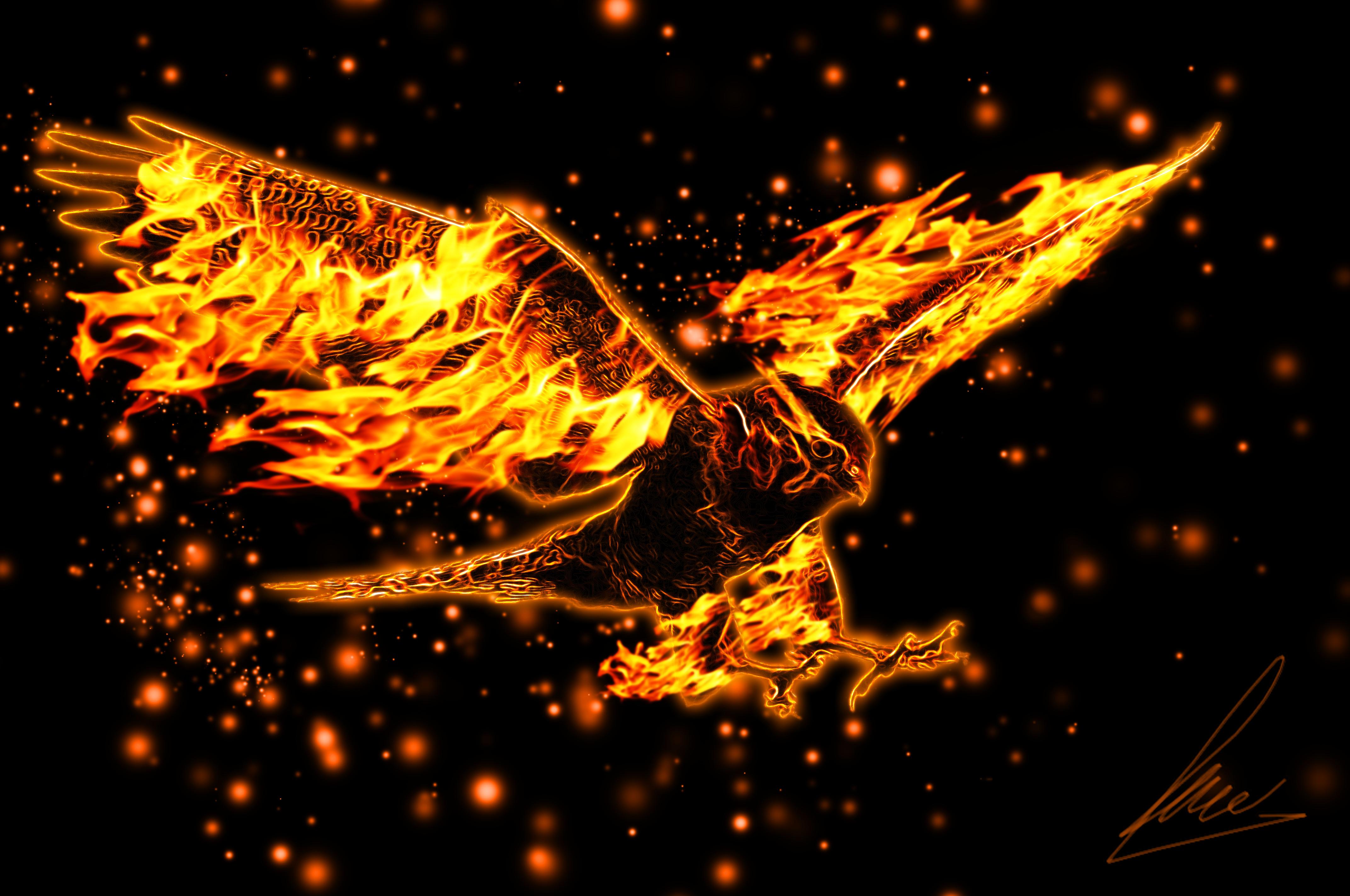 Fire Eagle 4k Ultra HD Wallpaper | Background Image ...
