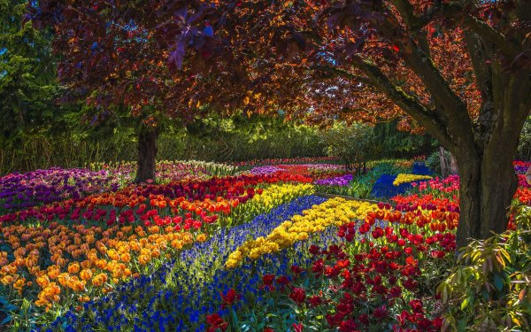 Photography Park Flower Tulip Colorful Tree HD Wallpaper | Background Image