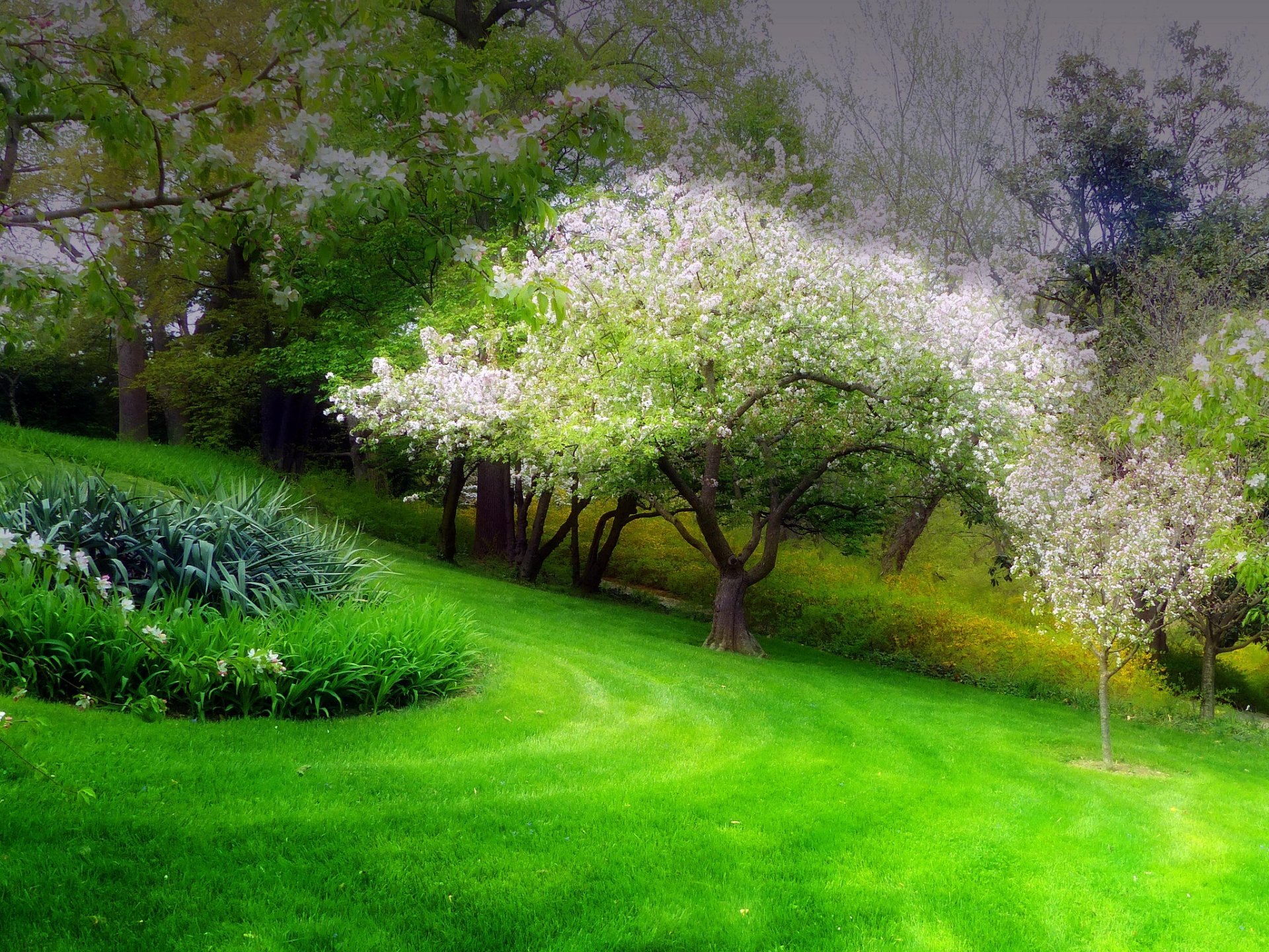 Earth - Spring  Earth Park Tree Flower Blossom Wallpaper