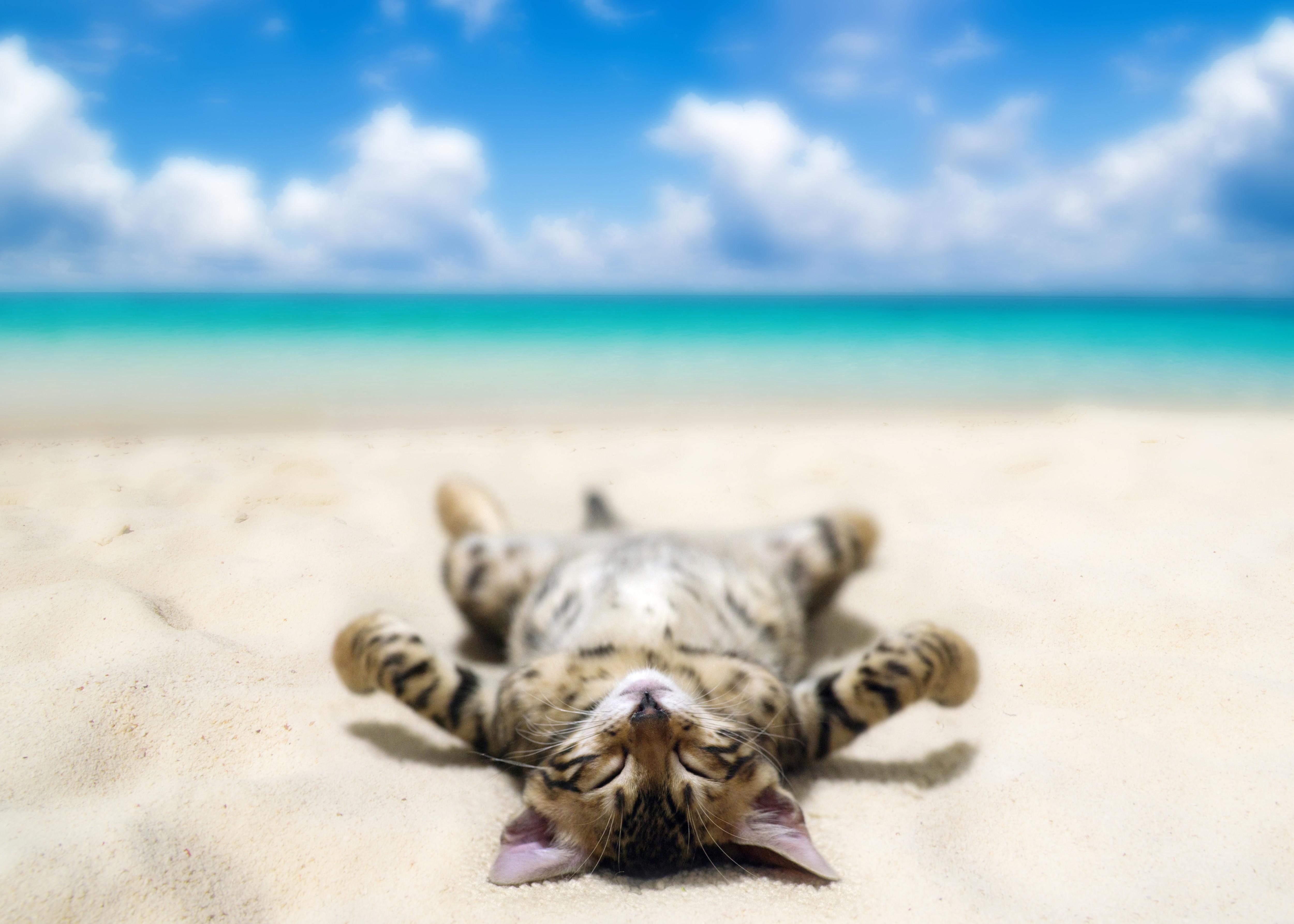 кошка солнце природа бесплатно