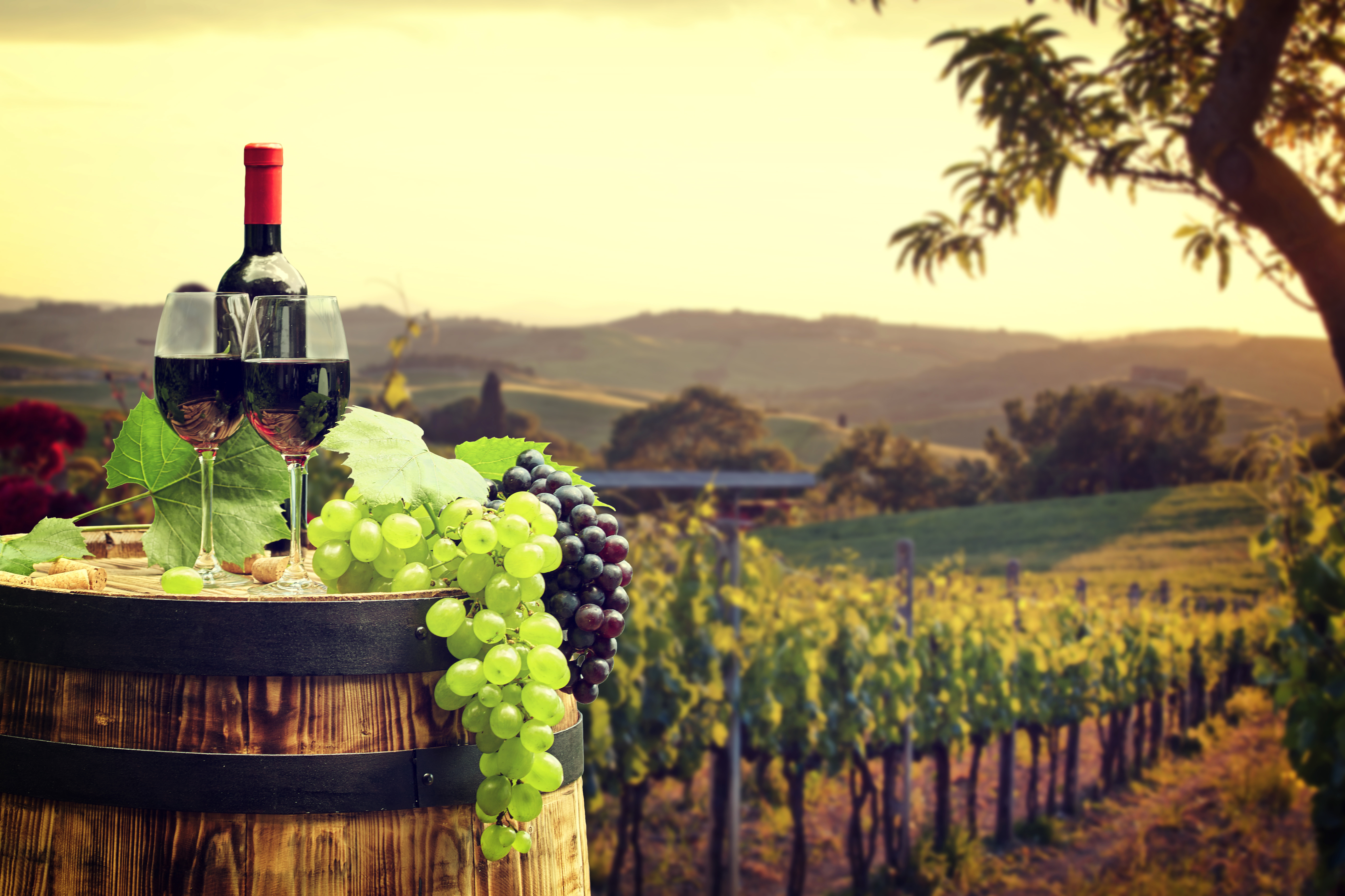 Vineyard Wallpapers - Full HD wallpaper search