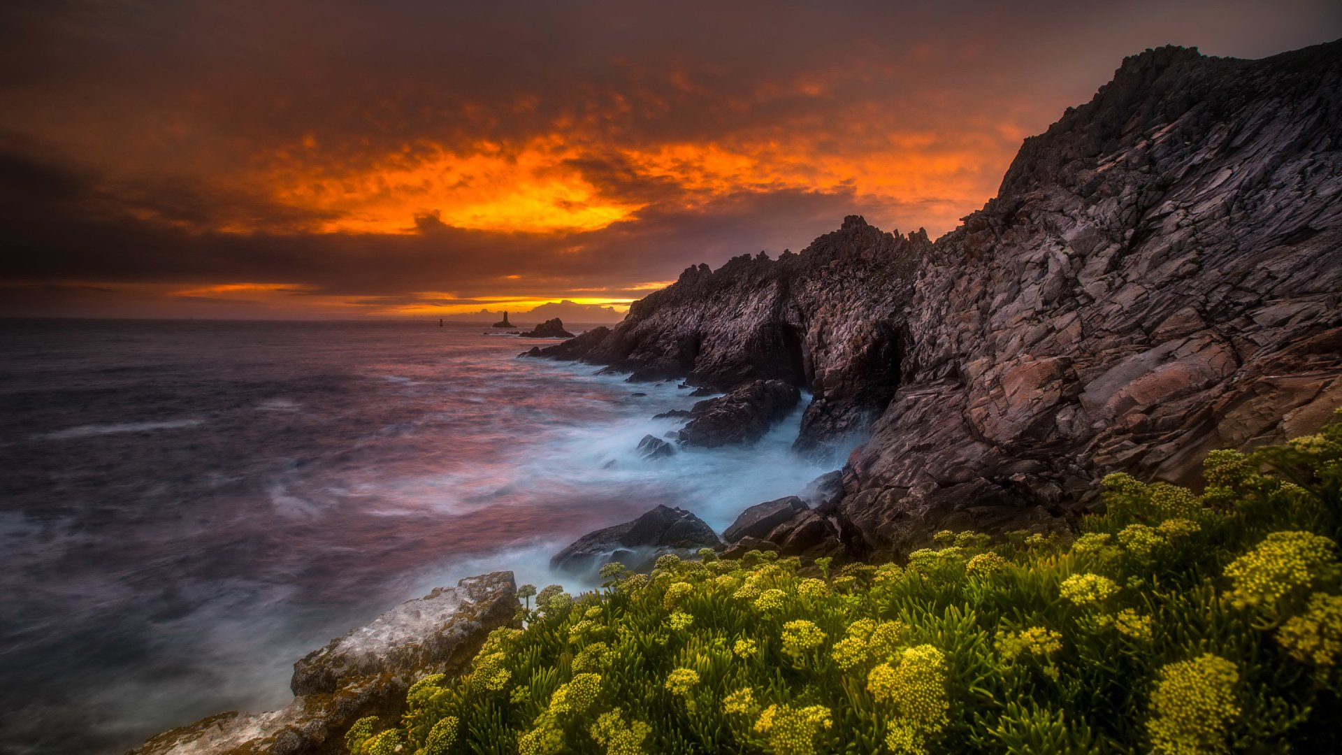 Flowers on the coastline at sunset hd wallpaper background image 2880x1620 id 734044 - 2880x1620 wallpaper ...