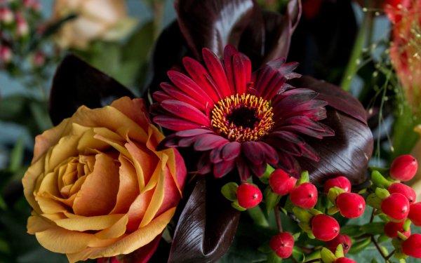 Photographie Nature Morte Fleur Rose Gerbera Baie Fond d'écran HD | Image