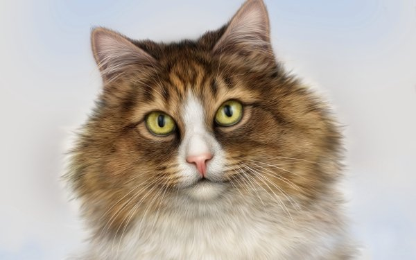 Animal Cat Cats Painting Face HD Wallpaper   Background Image