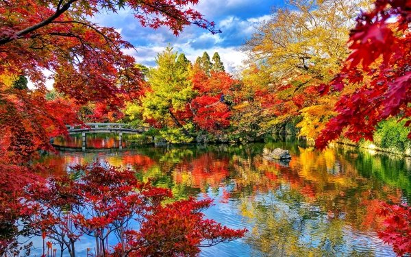 Man Made Japanese Garden Bridge Lake Fall Foliage Tree Forest Park Garden HD Wallpaper | Background Image