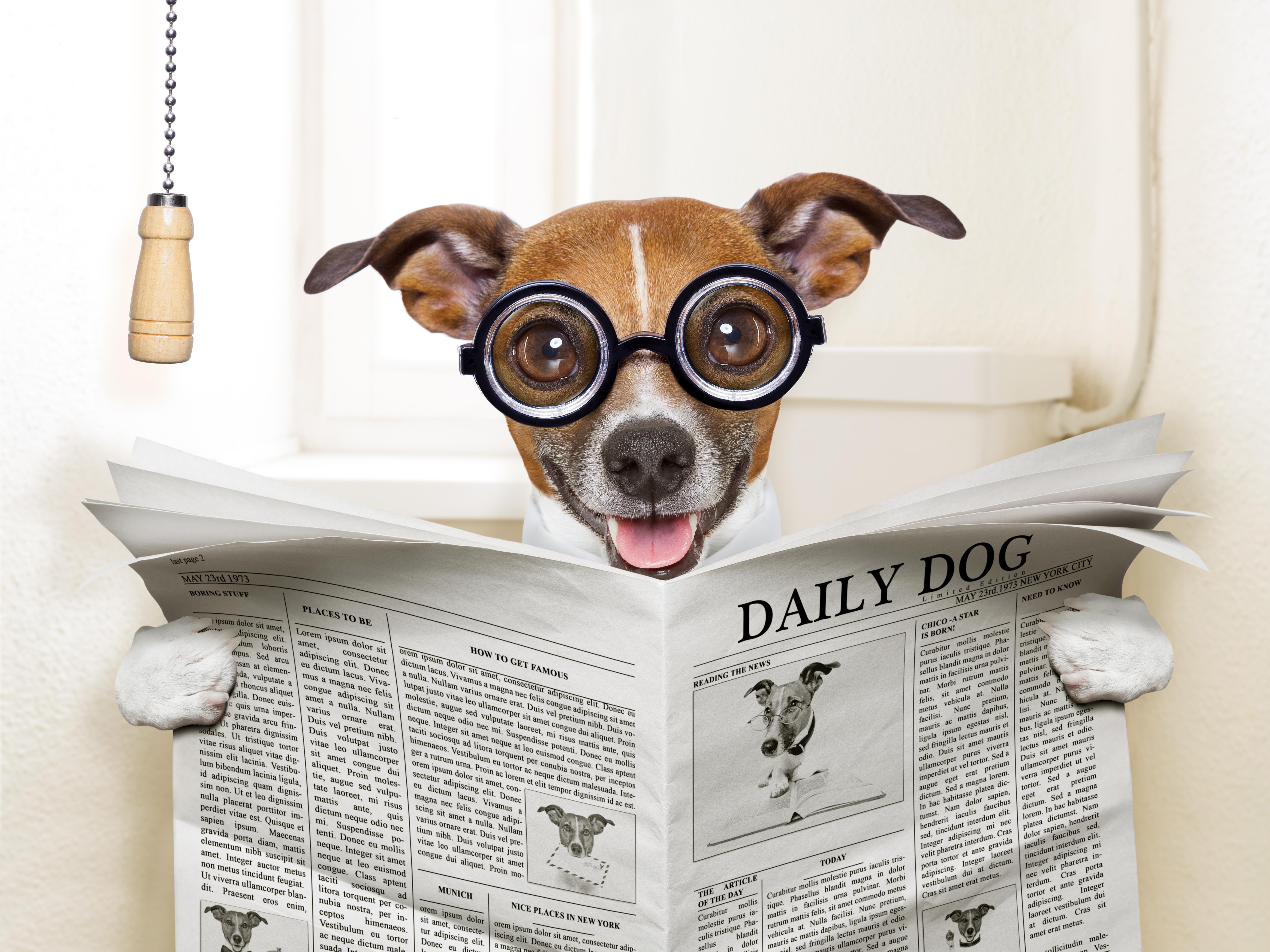 Reading a newspapaper on the loo 5k Retina Ultra Fond d'écran HD | Arrière-Plan | 5928x4446 | ID ...