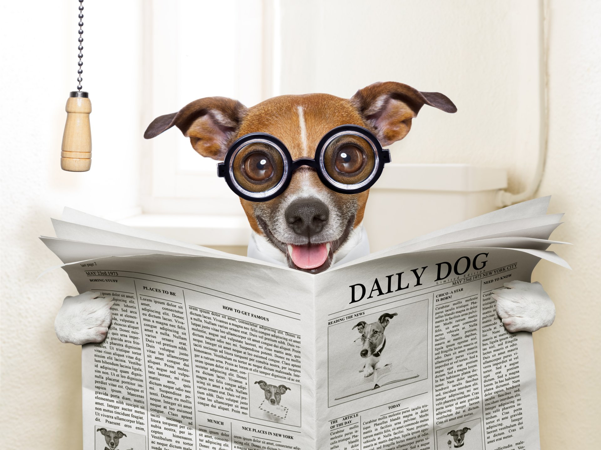 Humor - Dog  Toilet Newspaper Humor Wallpaper