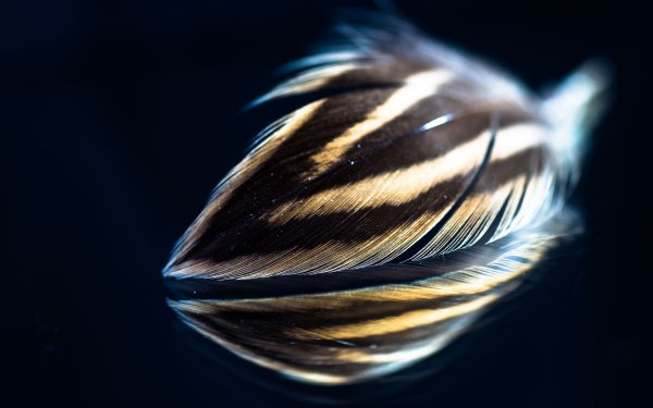 Photography Feather Reflection HD Wallpaper   Background Image