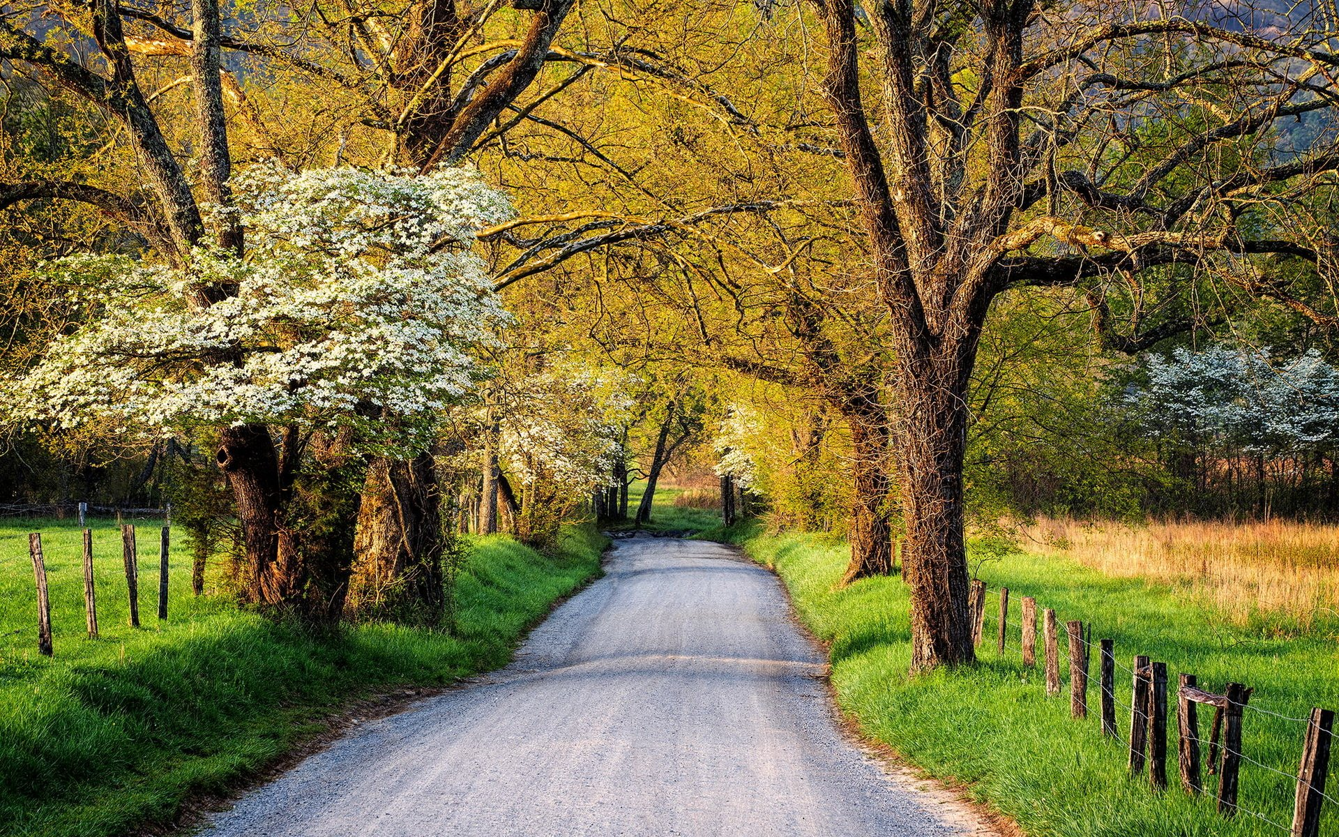 Country Road in Springtime HD Wallpaper