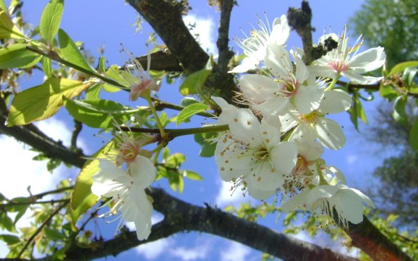 Earth Blossom Flowers Flower HD Wallpaper | Background Image