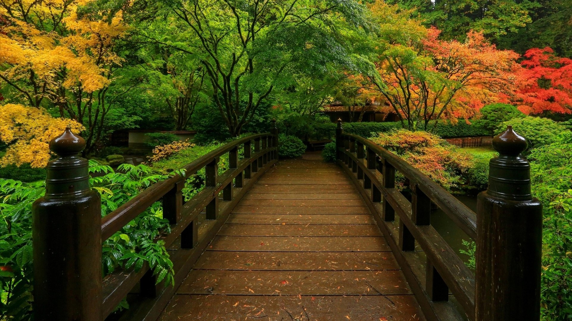 Japanese Garden Wallpapers: Bridge In Japanese Garden HD Wallpaper