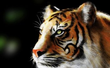 Animal - Tiger Wallpapers and Backgrounds ID : 74673